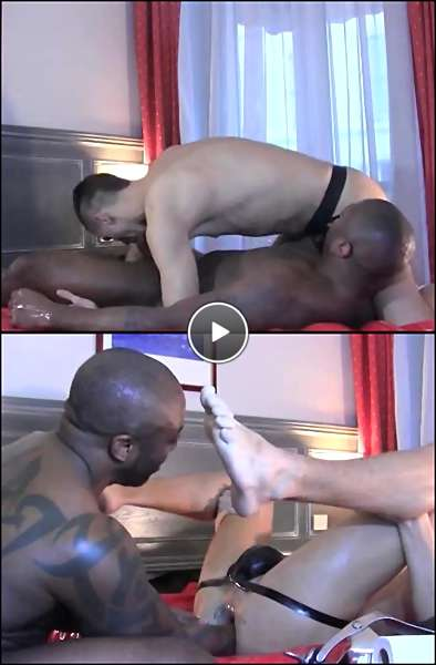 gay bear xxx video video